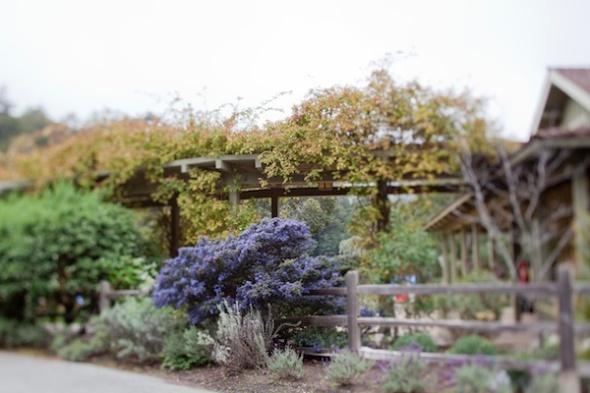 natural-landscaping-design